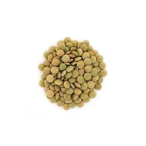Encyklopedie potravin - Čočka zelená