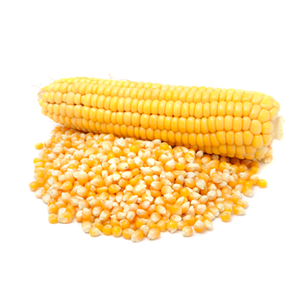 Encyklopedie potravin - Kukuřice