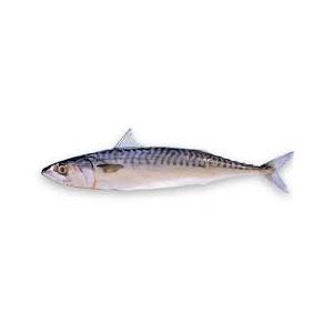 Encyklopedie potravin - makrela