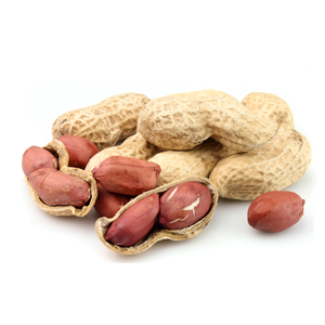 Encyklopedie potravin - Ořechy burské