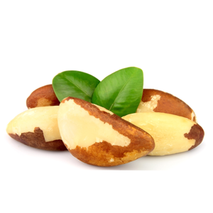 Encyklopedie potravin - Ořechy para