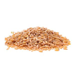 Encyklopedie potravin - Pšenice