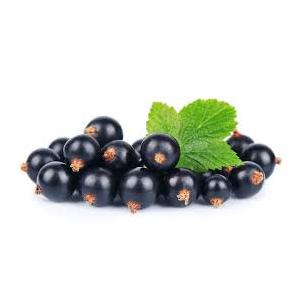 Encyklopedie potravin - Rybíz černý