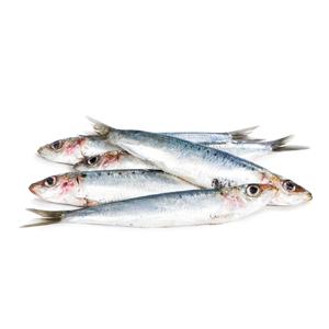 Encyklopedie potravin - Sardinky