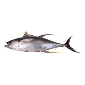 Encyklopedie potravin - Tuňák
