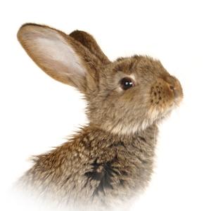 Encyklopedie potravin - Zajíc