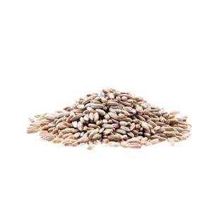 Encyklopedie potravin - Žito